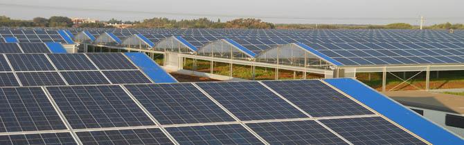 Quale Luce Sostituisce Quella Solare Per Piante Da Interno  semarang 2022